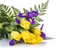 Пук желтых тюльпанов и голубых радужек на белой предпосылке Стоковые Изображения