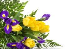 Пук желтых тюльпанов и голубых радужек на белой предпосылке Стоковая Фотография