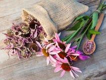 Пук заживление coneflowers и мешка с высушенным flowe эхинацеи стоковые фото