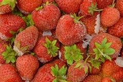 пук замороженных красных клубник Стоковая Фотография