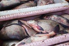 Пук замороженных рыб, леща, плотвы Стоковое фото RF