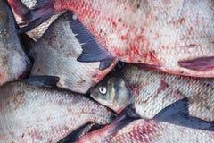 Пук замороженных рыб, леща, плотвы Стоковые Изображения