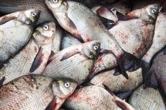 Пук замороженных рыб, леща, плотвы Стоковая Фотография