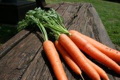 Пук зеленого цвета морковей выходит на зеленую траву на солнечный день конец вверх Взгляд сверху Стоковое Изображение