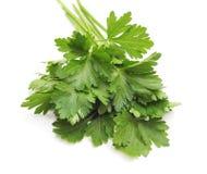 Пук зеленой петрушки стоковое изображение rf