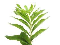 Пук зеленой травы стоковое фото rf