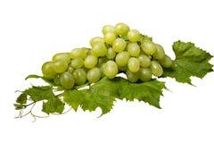 Пук зеленых виноградин и листьев на белой предпосылке Стоковые Изображения RF