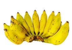 Пук зрелого банана Стоковые Изображения RF