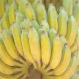 Пук зрелых бананов на дереве в плантации Стоковая Фотография RF