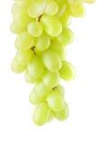 Пук зрелых виноградин на белизне Стоковое фото RF