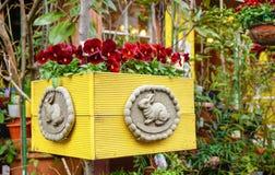 Пук и зеленый цвет цветка красные в цветочном горшке Стоковое Изображение RF