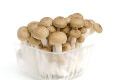 Пук коричневого гриба Shimeji бука Стоковое Изображение RF