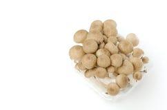 Пук коричневого гриба Shimeji бука Стоковая Фотография