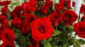 Пук красивых красных роз с зеленым цветом выходит фото принятый в Semarang Индонезию Стоковые Изображения