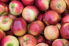 Пук красивых свежих красных, желтых, и зеленых яблок Стоковые Фотографии RF