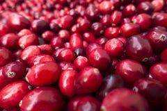Пук красных, органических клюкв на рынке стоковые изображения rf