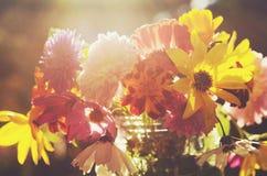 Пук красочных цветков в мягком солнце освещает Стоковые Изображения