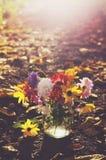 Пук красочных цветков осени в солнечных лучах Стоковое Изображение