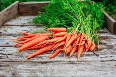 Пук морковей на предпосылке деревянных планок Стоковое фото RF