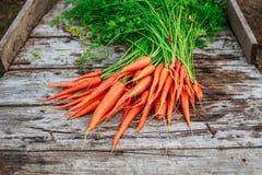 Пук морковей на предпосылке деревянных планок Стоковое Фото
