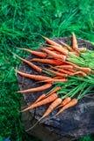Пук морковей Стоковая Фотография
