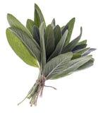 Пук мудрых свежих листьев Стоковое фото RF