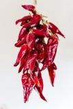 Пук перца Chili Стоковое Фото