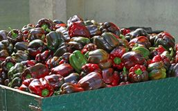 Пук перцев над тележкой готовой быть проданным greengrocers Стоковое Изображение