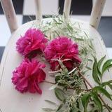 Пук пиона цветет на белой винтажной скатерти Стоковое Изображение