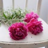Пук пиона цветет на белой винтажной скатерти Стоковые Фотографии RF