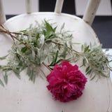 Пук пиона цветет на белой винтажной скатерти Стоковое Фото