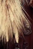 Пук пшеницы стоковая фотография