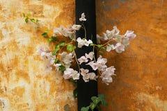 Пук растущего цветков от отказа в стене стоковое изображение rf