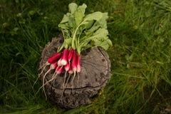 Пук редисок с зелеными листьями на предпосылке зеленой травы Органическая концепция овощей стоковая фотография rf