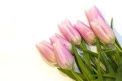 Пук розовых тюльпанов против белой предпосылки o стоковое фото