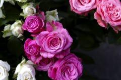 Пук роз и темной предпосылки Стоковая Фотография RF