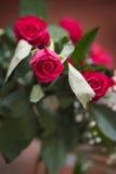 Пук роз Стоковая Фотография RF