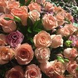 Пук роз Стоковое Изображение RF