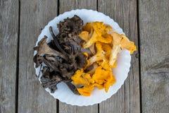 Пук свежего cibarius mushroomsCantharellus лисичек апельсина и черноты на белой плите стоковое изображение