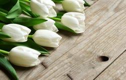 Пук свежих белых цветков тюльпана закрывает вверх по составу Стоковые Фото