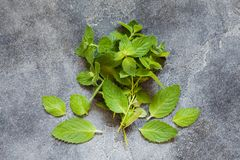 Пук свежих зеленых органических лист мяты Стоковое Фото