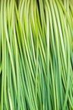 Пук свежих зеленых луков Стоковое Изображение RF