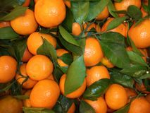 пук свежих зрелых tangerines с зелеными листьями стоковые изображения