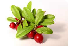Пук свежих зрелых клюкв или cowberries на белизне Стоковые Изображения