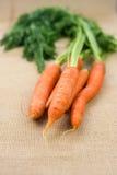 Пук свежих морковей с зеленым цветом выходит над деревенской предпосылкой Стоковое Фото