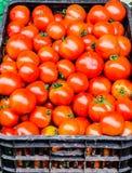 Пук свежих томатов в корзине стоковые фотографии rf