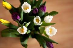Пук свежих фиолетовых, желтых и белых цветков тюльпана в конце вазы вверх Стоковое Фото