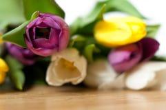 пук свежих фиолетовых, желтых и белых цветков тюльпана закрывает вверх Мягкие фокус и bokeh Стоковые Изображения