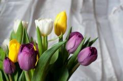 пук свежих фиолетовых, желтых и белых цветков тюльпана закрывает вверх Мягкие фокус и bokeh Стоковые Изображения RF
