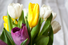пук свежих фиолетовых, желтых и белых цветков тюльпана закрывает вверх Мягкие фокус и bokeh Стоковая Фотография